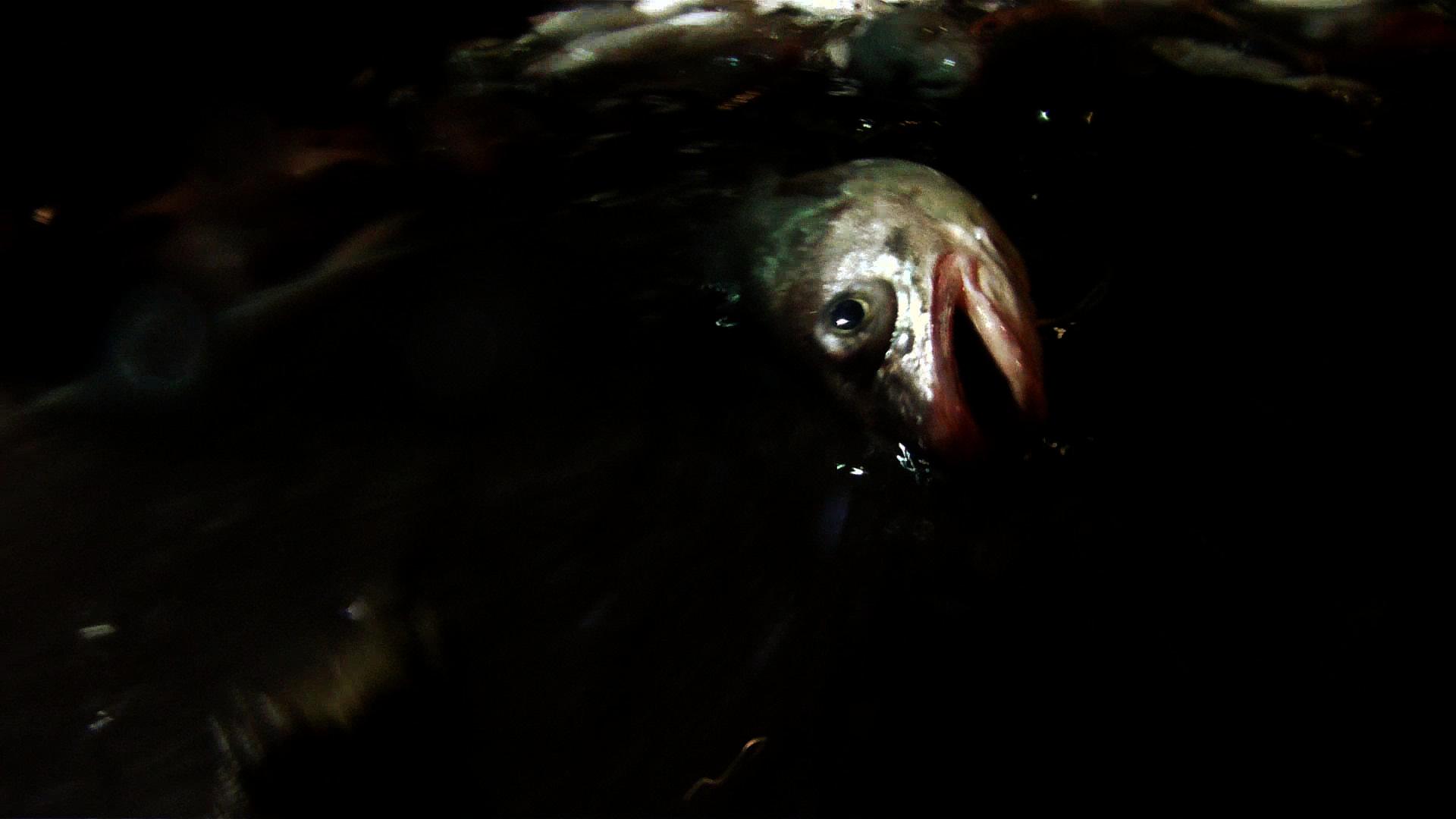 poissonvaetvient